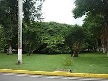 El Arbol Indú del Hotel Maracay