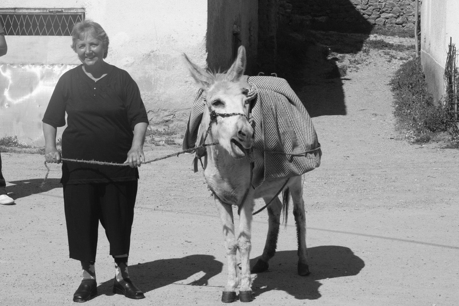 [donkey+001.jpg]