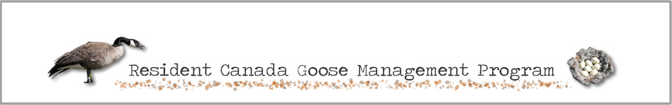 Resident Canada  Goose Management Program