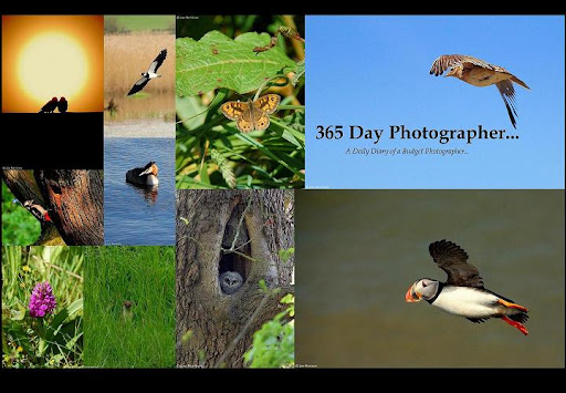 365 Day Photographer...