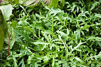 Arugula in the Garden