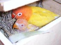 Mamma con pullo nel nido