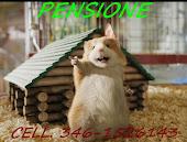 Pensione Cavie Peruviane