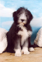 Tender als jonge hond