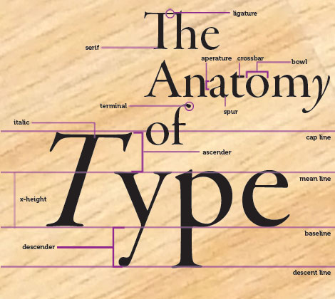 20at30 Back To Basics The Anatomy Of Type
