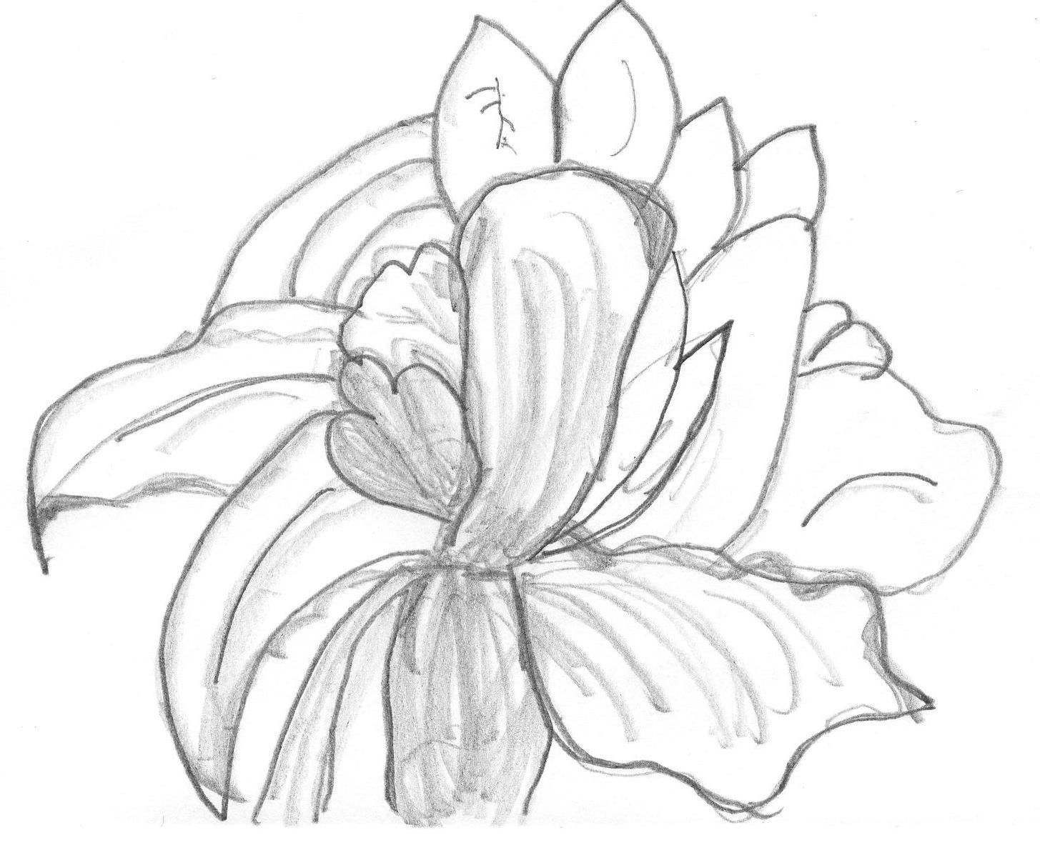 [lotus+sketch.jpg]