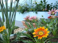 Tem um jardim florido? envie fotos dele, mostre seu cantinho especial