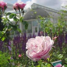 Trädgårdsföreningen Gothenburg