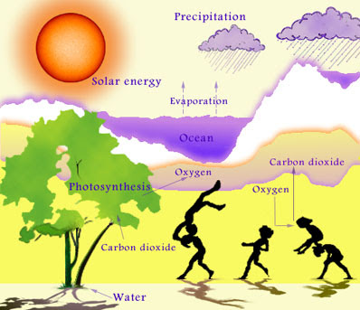 Immanuel college year 9 science discovering ecosystems ecosystem earth without the sun our earth would be a dead cold and dark place ccuart Choice Image
