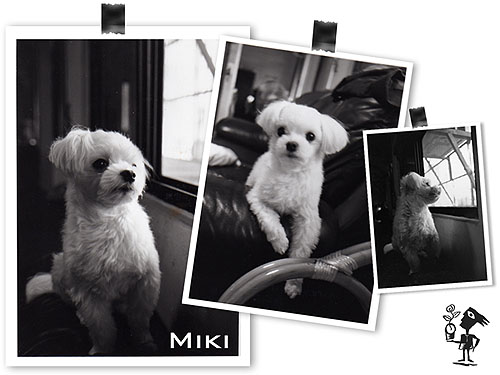 r.i.p. miki