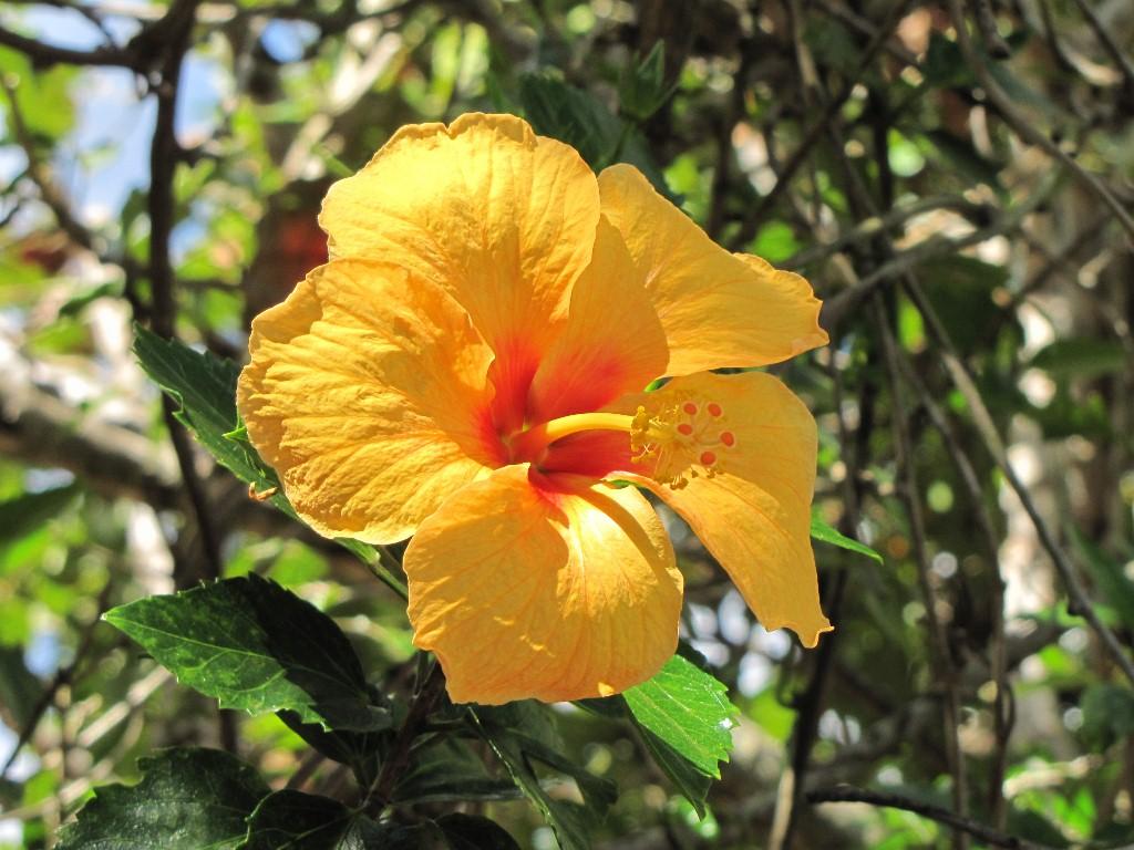 PLANTAS E BICHOS DE BRASÍLIA (anotações de um naturalista amador