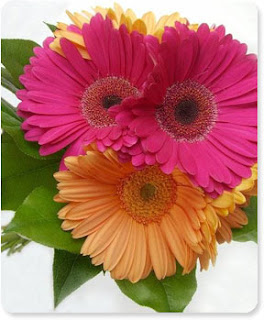 pink and orange gerbera daisy bouquet