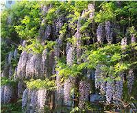 giardini di Firenze mostre fiori