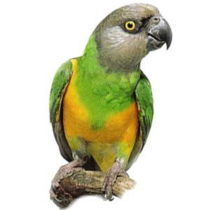 Loro con cuerpo verde y amarillo
