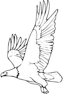Fotos Del Aguila   Nombre Dado A Las Mayores Aves Depredadoras