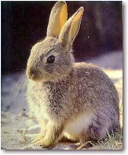 Foto del conejo