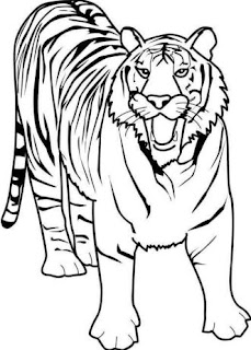 Dibujo de un tigre gruñendo para colorear o pintar