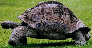 Foto de la tortuga