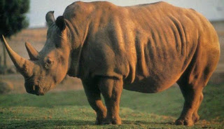 Foto del rinoceronte