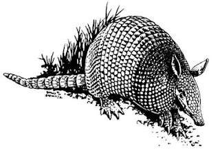 Dibujo de un armadillo