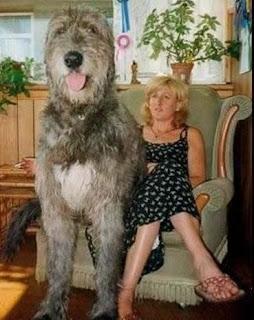 Perro gigante con su dueña
