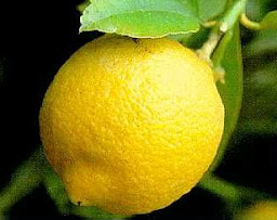 I LOVE LEMON!!!