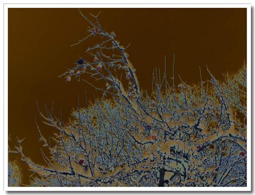 Vinterträd solariserat
