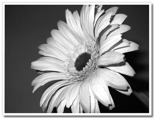Blomma svartvit 1
