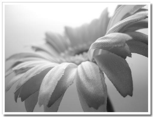 Blomma svartvit 2