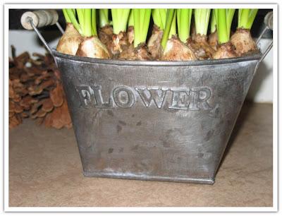 Flowers blomkruka