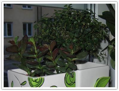 Fetblad och trädet
