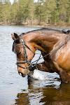 Hesten min
