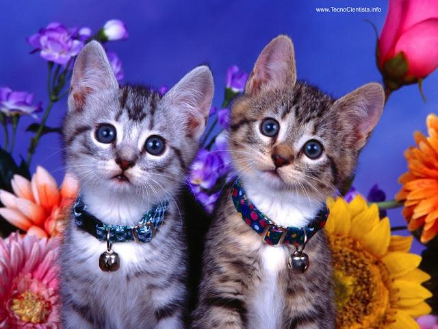 Sobre gatosVS Lampert | VS Lampert