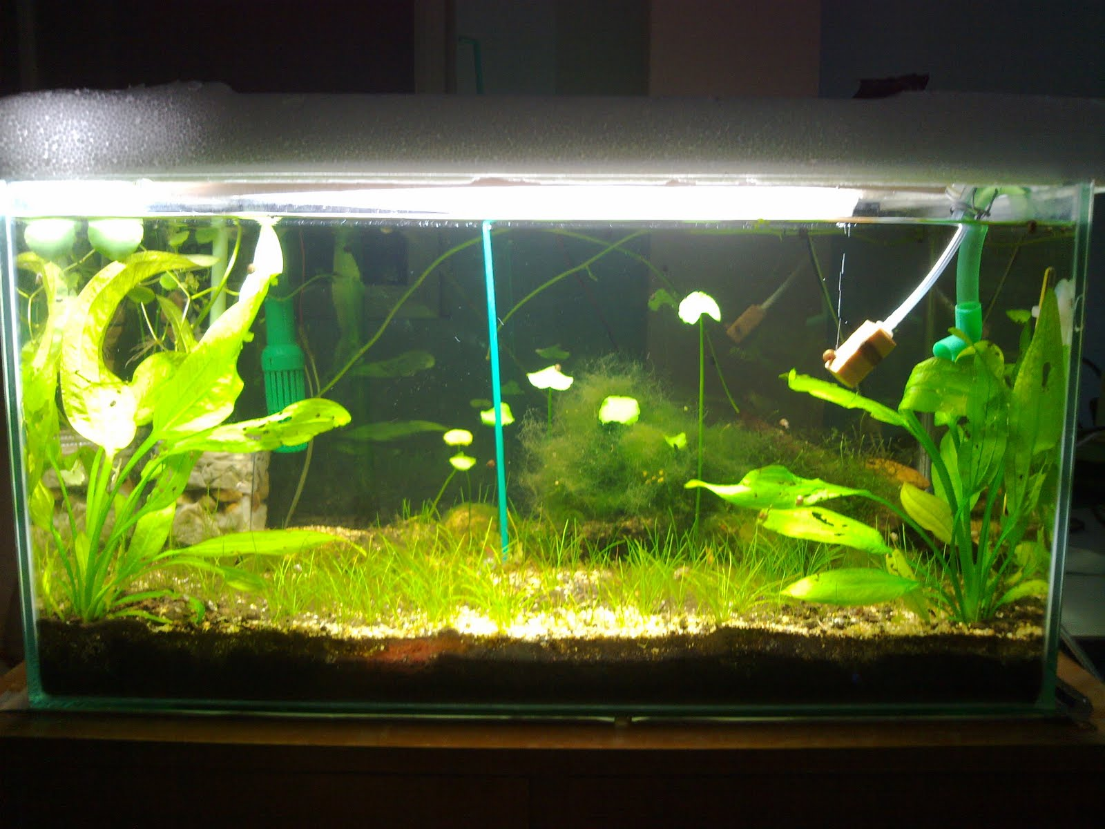 Foo aquariums kuching my shrimp like spinach for Shrimp fish tank