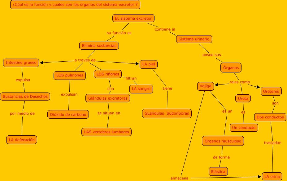 Sistemas de Nutrición: Sistema Excretor