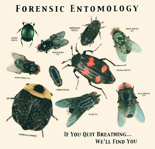 an essay on forensic entomology Combining an education of entomology and law, hall has been involved in the advancement of forensic entomology and in interfacing entomology with the judicial system he is routinely consulted by law enforcement and judicial agencies regarding analysis and interpretation of entomological evidence.