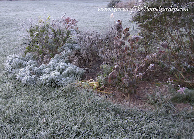 picture, birdbath garden, frost