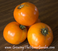 'Woodle Orange' Heirloom Tomato