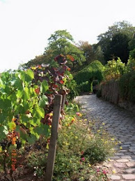 Vineyard Montmartre