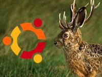 Come scaricare più velocemente Ubuntu 9.04 Jaunty Jackalope usando BitChe