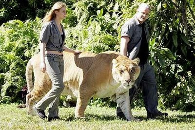World's largest LIGER (Lion + Tiger) Amazing Facts
