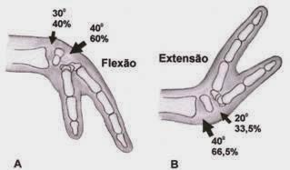 Goniometria da mão