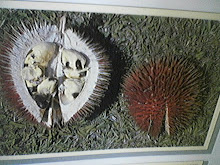 Tutong/Red Durian/Lahong