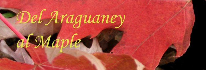 Del Araguaney Al Maple