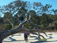 treed...