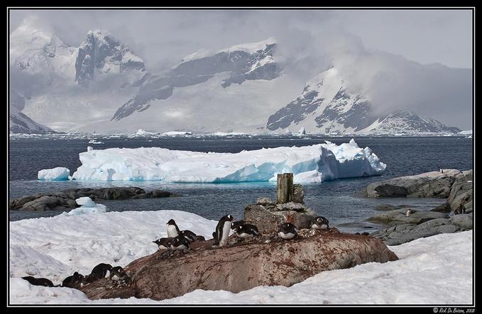 7872532 - Antarctica