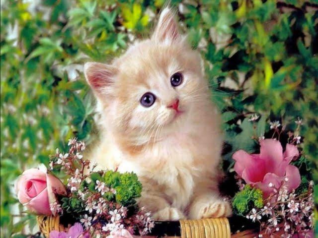 412627 - Cute Cat....
