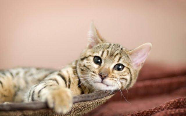 396153 - Cute Cat....
