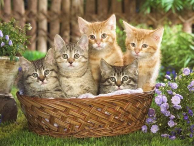 337599 - Cute Cat....