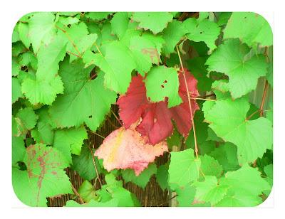 Applewood Farm Publications - Harvest Wreath Quilt Pattern